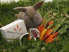 only Luv Bunny Magic can turn carrots into carats so get hoppin and start shoppin